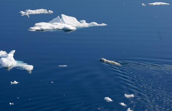 ArcticTop10of2012